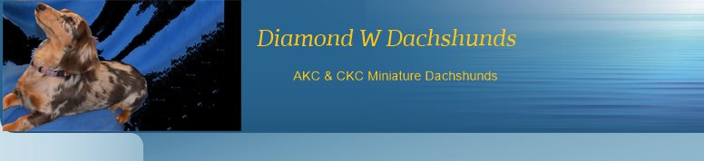 Diamond W Dachshunds  - AKC & CKC Miniature Dachshunds